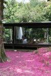 vista externa da cobertura do solo por flores de jambeiro